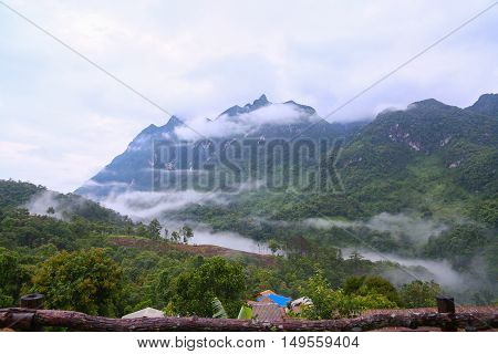 Mountain in nature and forest, Feeling good in relax day or holiday in the mountain,Forested mountain slope in low lying cloud with the evergreen conifers shrouded in mist in a scenic landscape view.