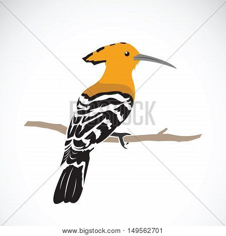 Vector of hoopoe on white background. Eurasian hoopoe (Upupa epops)