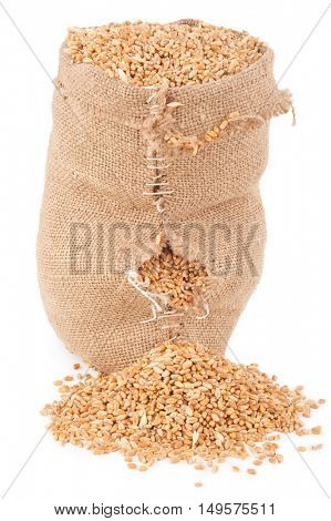 torn bag with wheat