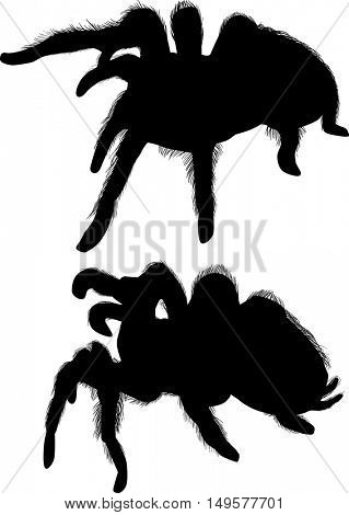illustration with large spider silhouettes isolated on white background