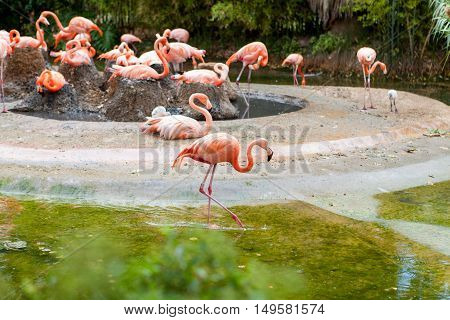 Pink Flamingo Standing In Water With Reflection