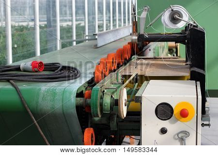 Automatic packaging line with flower processing machine in the nursery of ornamental plants.