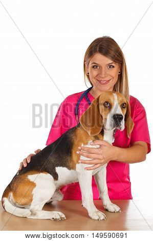Picture of a dedicated young veterinarian with a little beagle