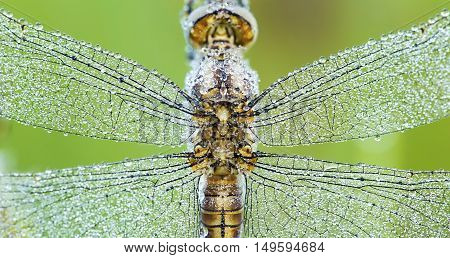 Website banner of dragonfly wings with water drops