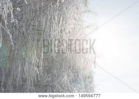 Beautiful Winter White Snowy With Snow On Tree Branches. Christmas.