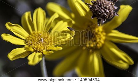 big yellow daisy flowers outdoor macro closeup