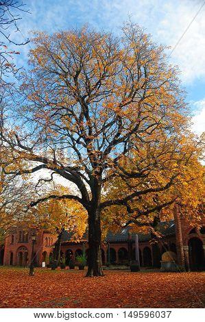 Tree in Norwegian capital Oslo in autumn