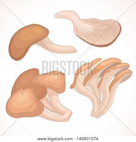 Set of oyster mushrooms isolated on background. Vector illustration in cartoon style. The whole and parts of mushrooms various forms