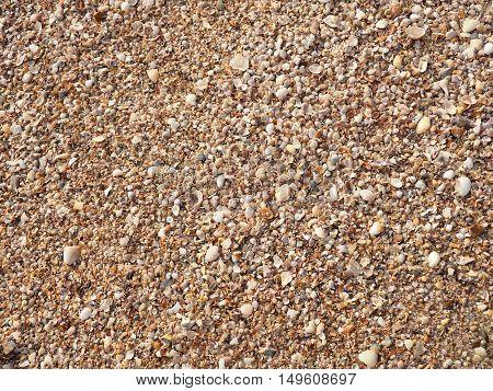 Seashells background. Many sea shells on a beach summer background. Small seashells and sand beach holiday background, summer backdrop.