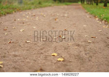 autumn leaves on park alley close up, calm landscape