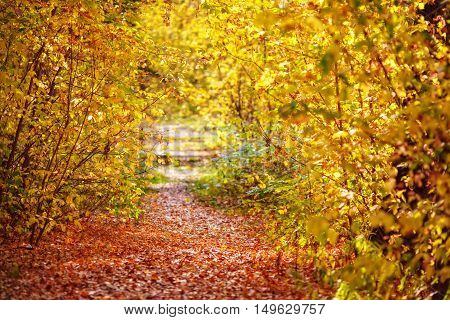 Pathway with fallen orange leaves through the colourful autumn forest