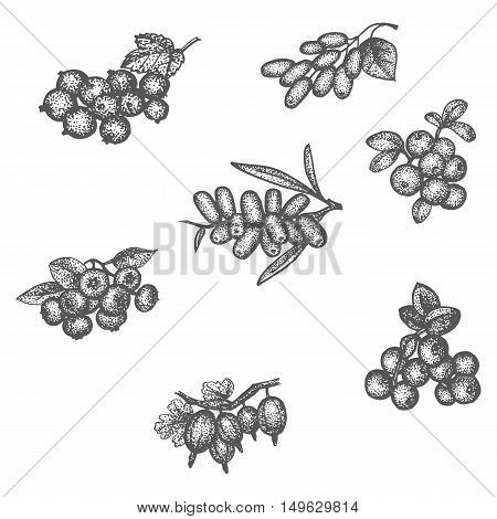 Vector illustration sketch doodle hand-drawn set different berries isolated on white background. Set of elements of berries for seamless pattern.