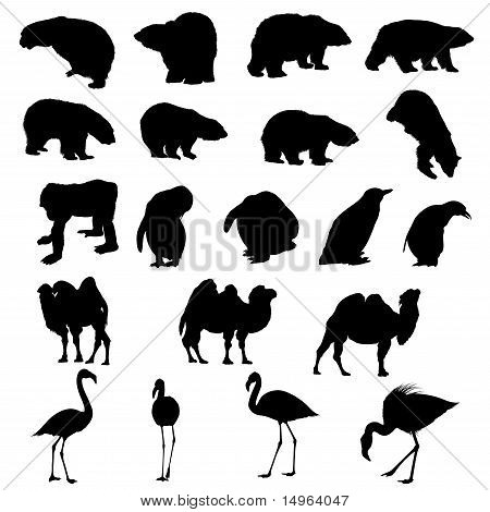 Set Of Bears, Ape, Penguins, Camels And Flamingos  Silhouettes.