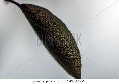 small green leaf outdoor macro closeup back light