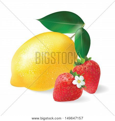 Lemon and Strawberry realistic vector illustration. Still life fruit.