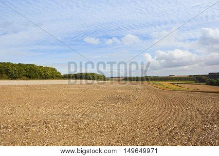 Harvest Time Scenery