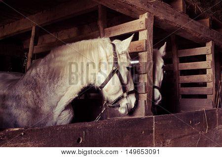 Mirror Image Horses