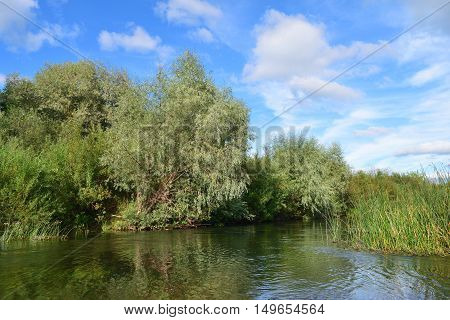 riverbank overgrown with willows and reeds reflected on a water surface