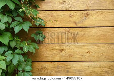 Wooden wall with green grape leaves as background