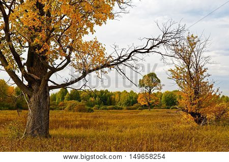 Autumn landscape with yellow-green trees and grass