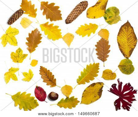 colorful autumn leaves on white background in heart shape. The fallen leaves top view.
