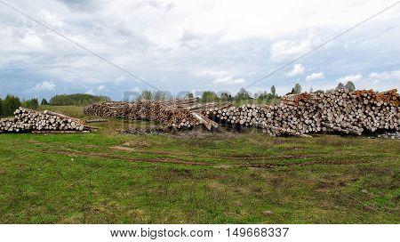 Racks wood logs in the field environmental disaster. deforestation