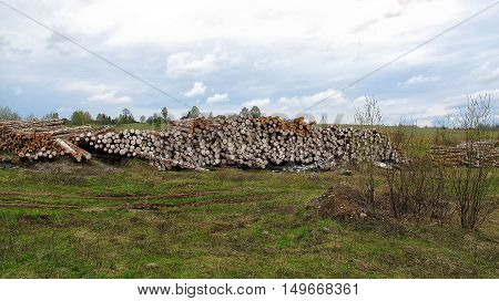 Wood logs in the field environmental disaster. deforestation