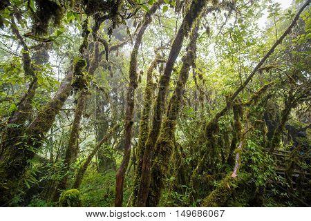 Scenic pathway of Ang Ka nature trail Doi Inthanon National Park Chiangmai ,Thailand.