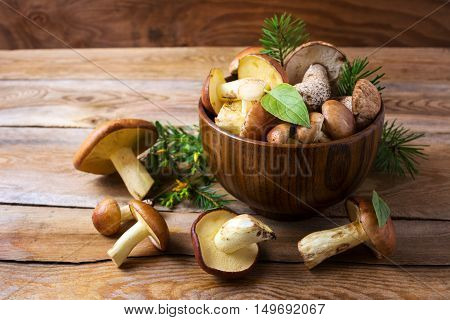 Forest picking mushrooms in wooden bowl . Fresh raw mushrooms on the table. Leccinum scabrum