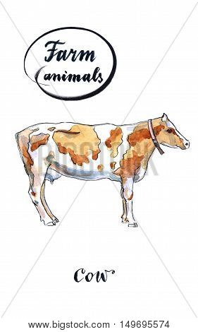 Dairy cow hand drawn - watercolor Illustration