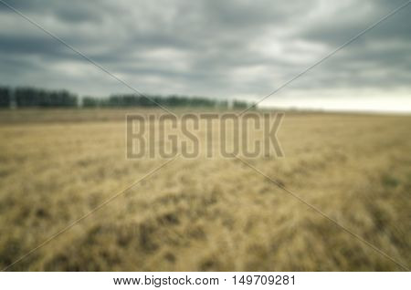 Blurred agricultural field where crops harvested cereals wheat.