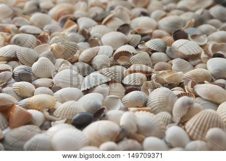 Macro photo of a group of seashells. Seashells background