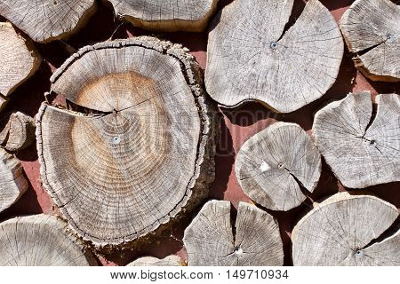 Background Of Sawed Tree Trunk Ends