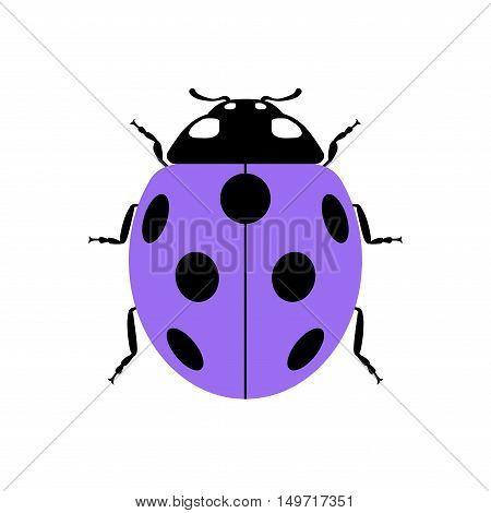 Ladybug small icon. Lilac lady bug sign isolated on white background. Wildlife animal design. Cute colorful ladybird. Insect cartoon beetle. Symbol of nature spring or summer. Vector illustration