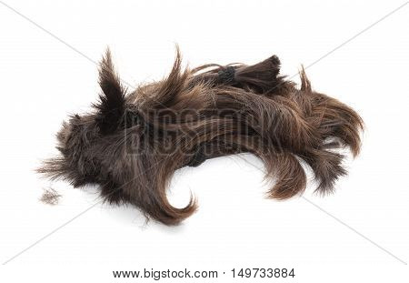 dark hair collected for charity wig making isolated on white