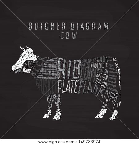 Chalk cow butcher diagram. Cut of beef set. Typographic vintage vector illustration