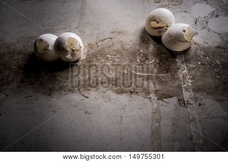 shell of gecko eggs stick on the wall
