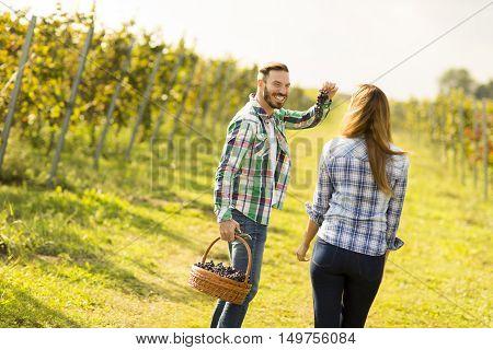Couple In Vineyard