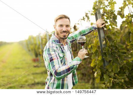 Winemaker In Vineyard