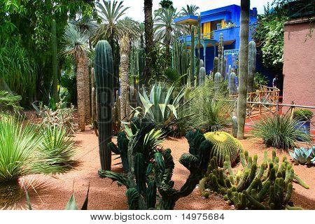 Jardine Majorelle In Marrakesh, Morocco