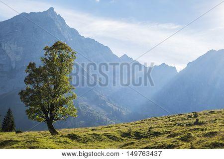 maple tree in the karwendel alps in autumn