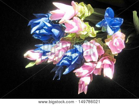 Bouquet of Pink and Blue Curcuma in Or Yehuda Israel October 19 2007