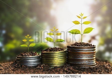 Money growing conceptBusiness success concept Tree growing on pile of coins money