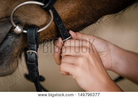 Woman Fixing Horse Bridle, Closesup
