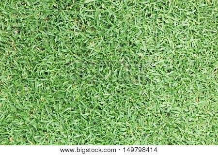 Golf Courses Green Lawn Pattern Textured