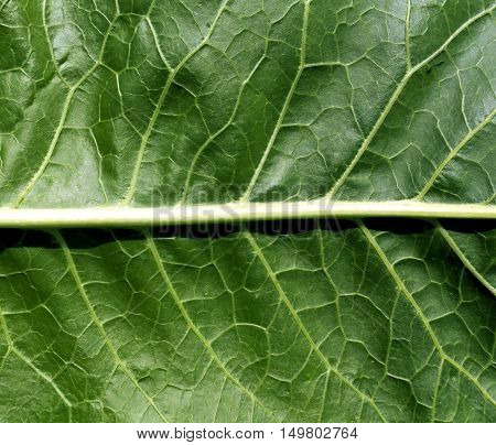 Green Leaf Texture.