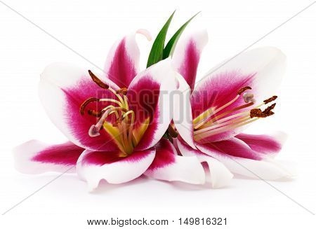 Two red lilies isolated on a white background.
