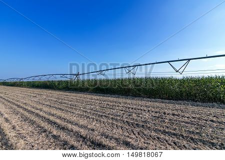 Corn field and irrigation equipment. irrigation system.