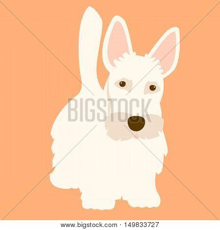 Scottish Terrier dog adult vector illustration flat