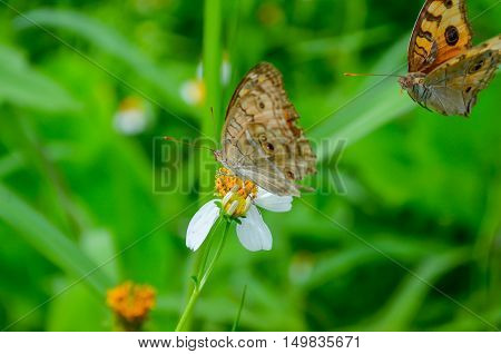 Butterfly Flower yellow green white animal outdoor